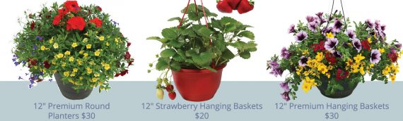 Hanging Baskets and Patio Planters